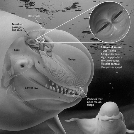 Archive One: Whale Anatomy