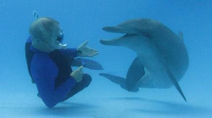 Dissertation Paper Dofin